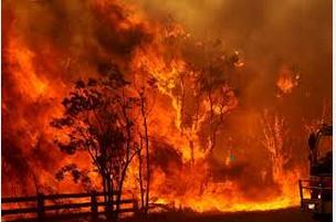 bushn fires