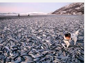 Fish death